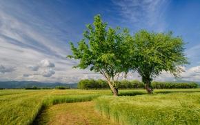 Картинка поле, небо, деревья, природа, поля, весна, Италия