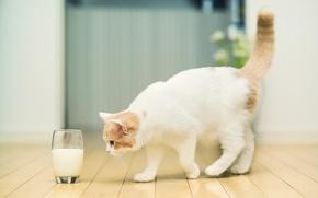 Картинка кошка, стакан, молоко, © Ben Torode, Hannah