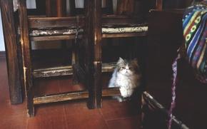 Картинка cute, garfield, cat