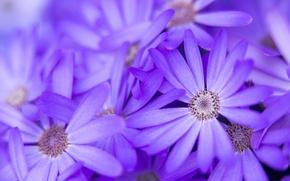 Картинка макро, цветы, природа, лепестки