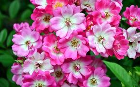 Картинка фото, Цветы, Крупным планом, Цветущие деревья