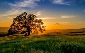 Картинка солнце, лучи, закат, дерево, луг, трава. горизонт