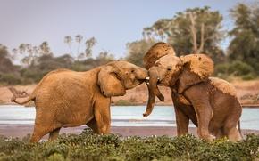 Обои wildlife, Kenya, Samburu, fighting, Africa, elephants
