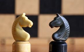 Обои конь, белое, чёрное, шахматы, фигуры