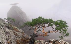 Обои лето, Крым, деревья, скала, туман
