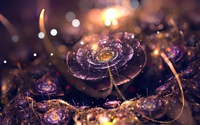 Обои sunset, drops, flower
