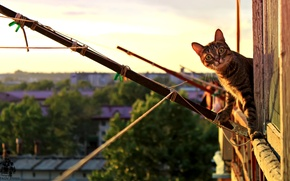 Картинка кошка, кот, Животные, Pyatkov_Denis
