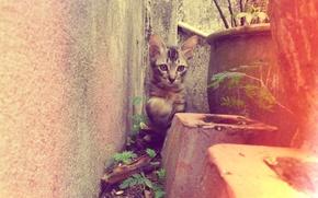 Картинка двор, котёнок, клумба, полосатый, kitten, cat, animal, cute, pet
