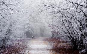 Картинка зима, иней, дорога, снег, деревья, скамейка, ветки, природа, парк, лавочка, дорожка, лавка, скамья