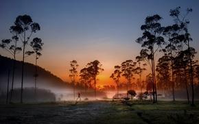 Картинка девушка, деревья, туман, зонт, утро, Рассвет