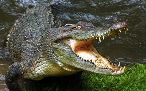 Картинка зубы, крокодил, пасть