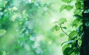 Картинка листья, дерево, росток, ствол, солнечные блики