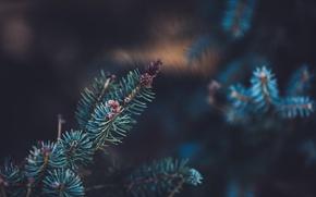 Картинка иголки, дерево, ель, зеленые