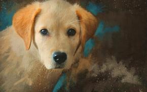 Картинка морда, рисунок, портрет, собака, картина, рыжий, щенок, живопись, мазки, обои от lolita777