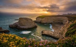 Картинка закат, цветы, скалы, побережье, бухта, Калифорния, Pacific Ocean, California, Тихий океан, Santa Cruz, Shark Fin …