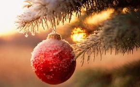 Обои елка, новый год, шар, ветка