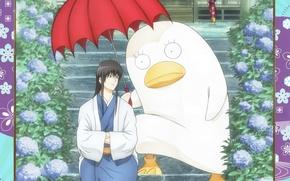 Картинка дождь, существо, зонт, трое, гортензия, gintama, ласты, гинтама, takasugi shinsuke, elizabeth, silver soul, kotaro katsura