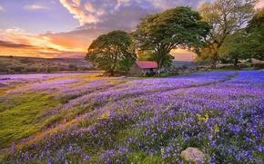 Картинка цветы, природа, деревья, тропинка, облака, колокольчики, лето, Поляна, строение, закат
