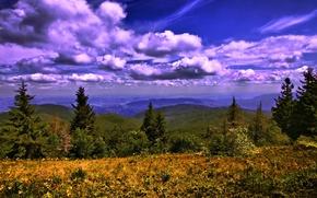Картинка небо, трава, облака, деревья, горы, Украина, леса, луга, Карпаты
