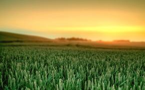 Картинка Пейзаж, природа, рассвет, трава, краски, небо, landscape, nature