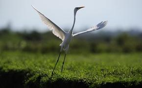 Обои танец, полёт, птица, природа