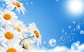 Картинка небо, солнце, пузыри, ромашки, белые