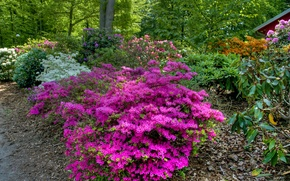 Картинка зелень, деревья, цветы, парк, Швеция, кусты, рододендрон, Helsingborg, Gardens of Sofiero Castle