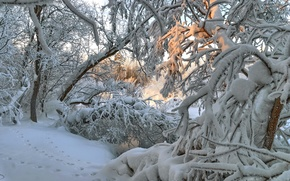 Картинка Зима, снег, деревья, свет, следы