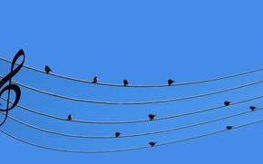 Обои ноты, музыка, провода, Воробьи