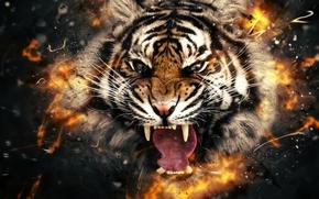 Картинка тигр, огонь, голова