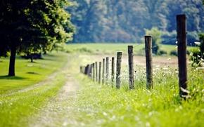 Картинка зелень, трава, листья, деревья, цветы, природа, фон, дерево, обои, листва, забор, размытие, ограда, луг, ограждение, ...