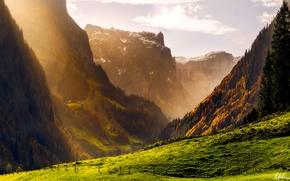 Обои осень, лес, горы, швейцария, альпы