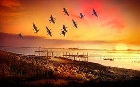 Картинка море, птицы, берег