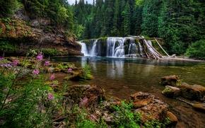 Картинка цветы, водопад, Washington, штат Вашингтон, Lower Lewis River Falls, лес, река Льюис, Lewis River, камни