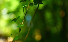 Картинка листья, макро, зеленый, фон, дерево, widescreen, обои, размытие, ветка, листик, wallpaper, листочки, широкоформатные, background, полноэкранные, …