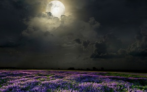 Картинка поле, цветы, ночь, луна, лаванда