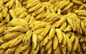 Обои много, бананы, жёлтые, фон, еда, растение