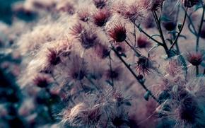 Картинка макро, цветы, природа, фото, фон, обои, растения