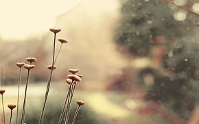 Картинка цвета, макро, цветы, растение, нежные