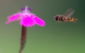 Обои цветок, муха, полёт