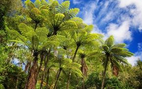 Картинка небо, листья, облака, деревья, пальма