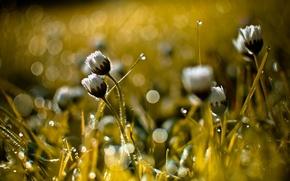 Картинка трава, природа, фон, bokeh