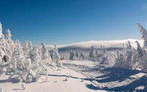 Картинка зима, дорога, снег, деревья, Германия, Germany, Саксония, Saxony, Ore Mountains, Рудные горы