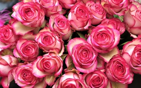 Картинка розы, бутоны, охапка