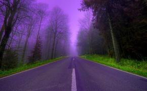 Обои дорога, деревья, туман, сиреневый, вечер, Лес, красиво