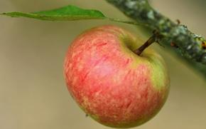 Картинка макро, фон, яблоко, ветка, плод