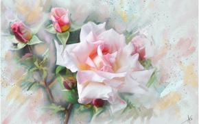 Картинка цветок, цветы, розовая, графика, Роза, живопись, нежно, пастельные тона, обои от lolita777