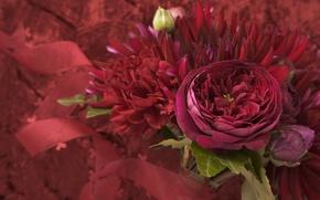 Картинка фиолетовый, листья, макро, цветы, букет, лепестки, flowers, бордовый, малиновый