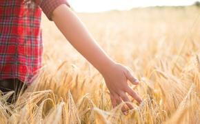 Картинка пшеница, поле, дети, фон, widescreen, обои, настроения, рожь, рука, мальчик, wallpaper, колосья, широкоформатные, background, полноэкранные, …