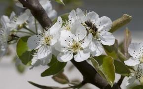 Картинка цветы, пчела, весна